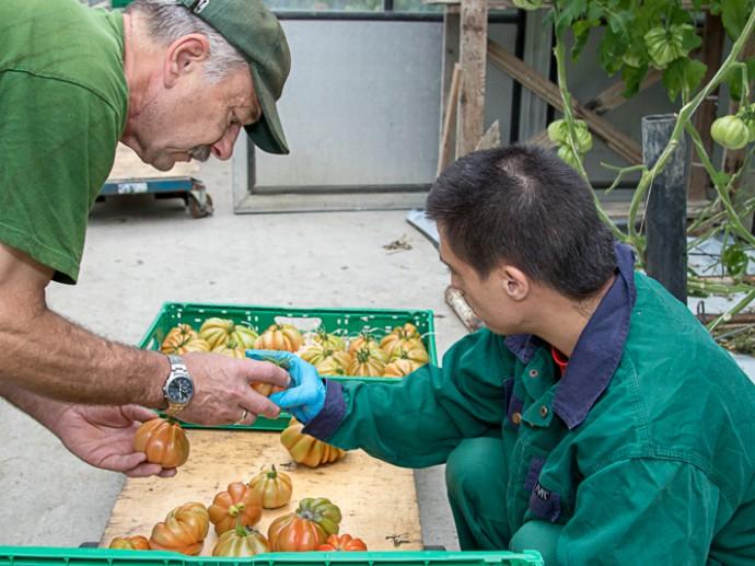 Gärtner Pannagl und Herr Steffler arbeiten im Team